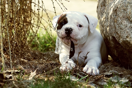 small puppy with leaf in the mouth Stock Photo