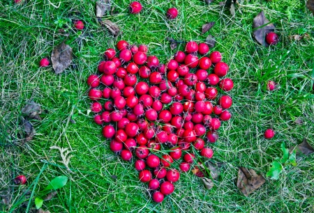 Red heart from berries on the grass Stock Photo