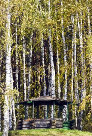 summerhouse in the birch boscage  photo