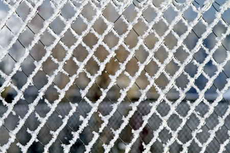 fence covered with snow on a winter day . Stock Photo - 17442073