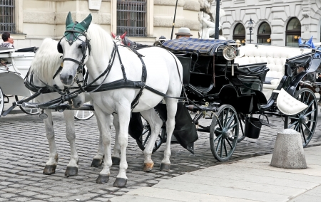 Two white horse in caps with a coach