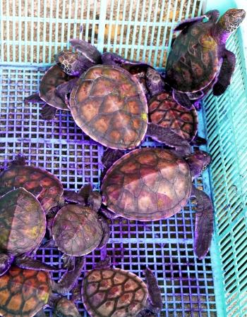Small turtles getting vet help