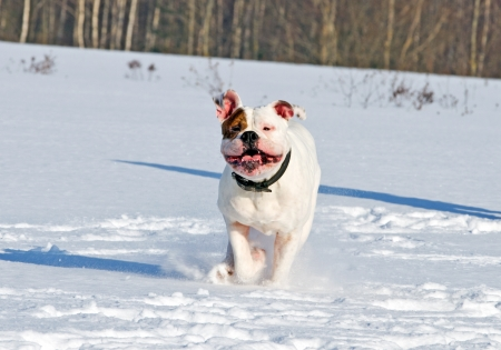 running dog in the snow .