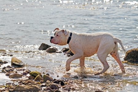 dog walking on the water photo