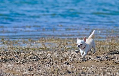 schattige hond loopt langs de rivier