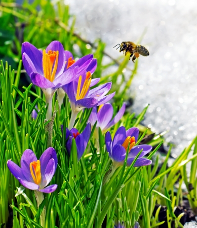 Bee and flowers on a spring day Stock Photo