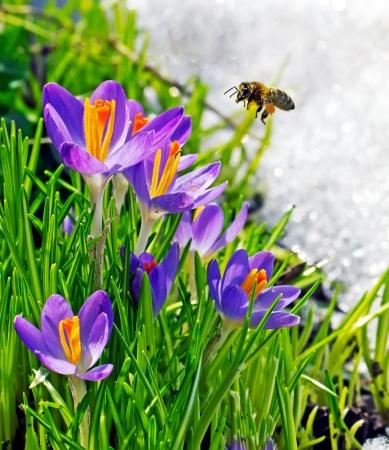 Bee en bloemen op een lentedag Stockfoto