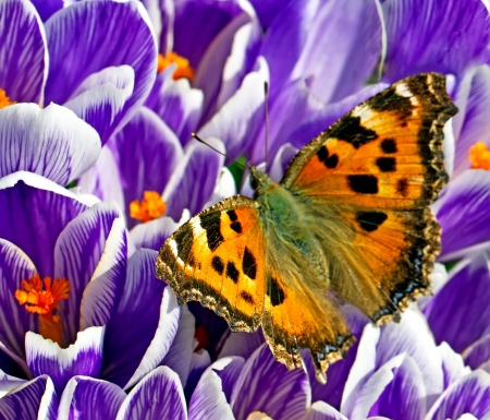 butterfly on the flower on a spring day