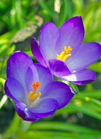 flowers macro picture