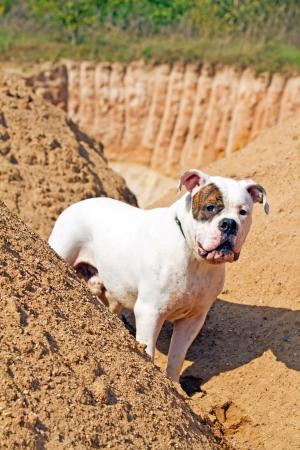 dog walking around heaps of sand