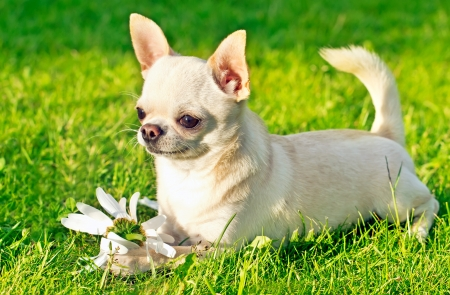 happy dog relaxing in the park on the grass Stock Photo