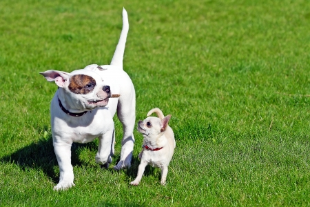 two happy puppies playing outdoors photo