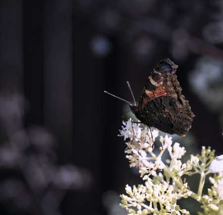 butterfly on the flower on a summer day photo