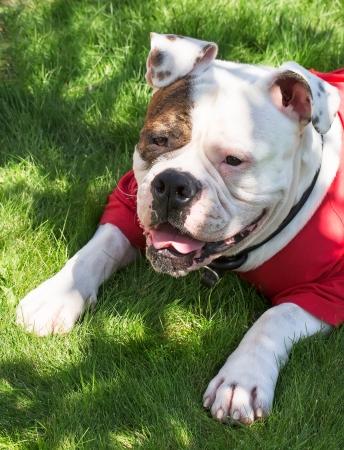 hond in kleren liggen op het gras