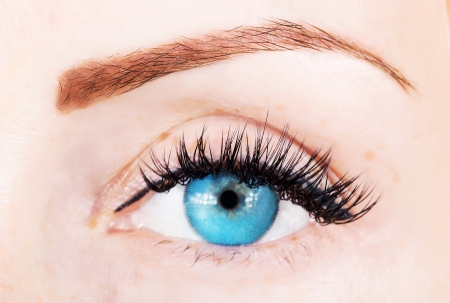 blue eye with bushy lashes and brow close up picture photo