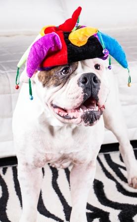 funny happy dog in cap . photo