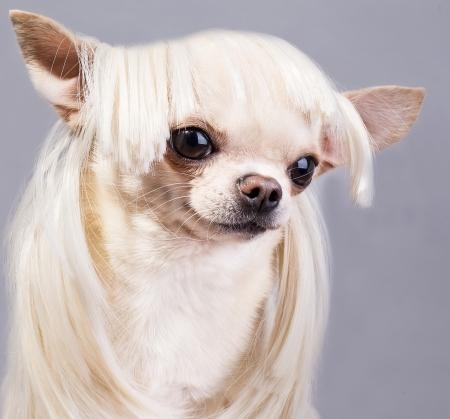 beautiful dog close up portrait photo