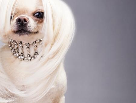 woman dog: perro sentado y mirando a la c�mara