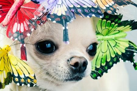 primer plano cara: La cara del perro de cerca la imagen Foto de archivo