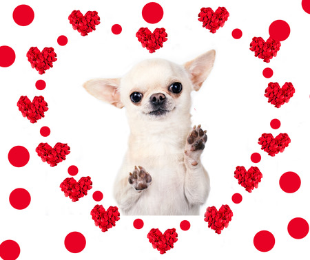 dog with  heart isolated over white photo