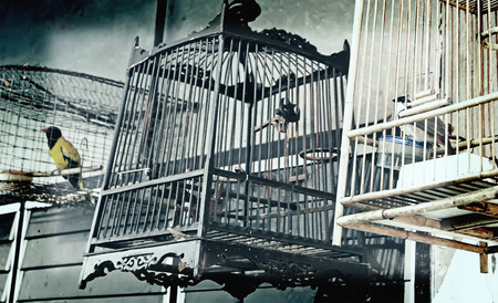 Cages with birds horizontal picture