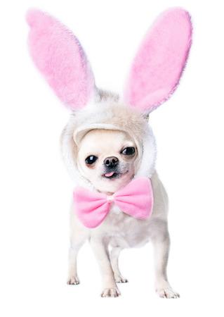 schattige hond met grappige hazen roze oren en vlinderdas geïsoleerde