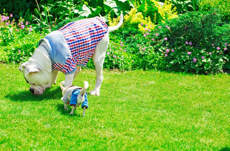 two dogs in clothes in the park on a sunny summer day photo