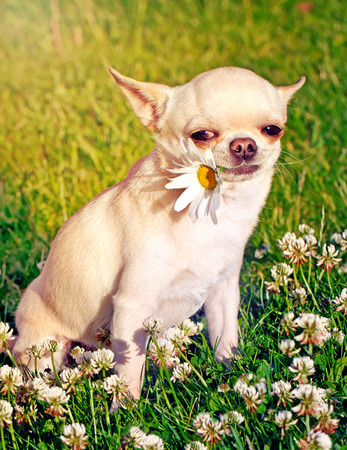 dog holding flower in mouth photo