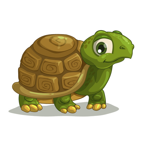 Cute cartoon turtle, isolated vector on white