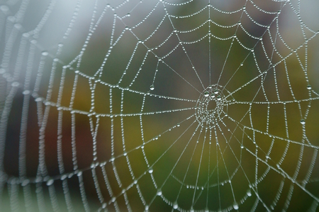 spiders web with pearls of dew
