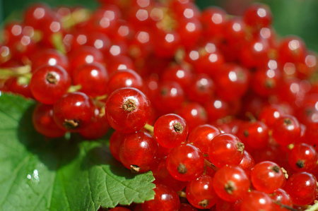 closeup of redcurrant with green leaf Фото со стока