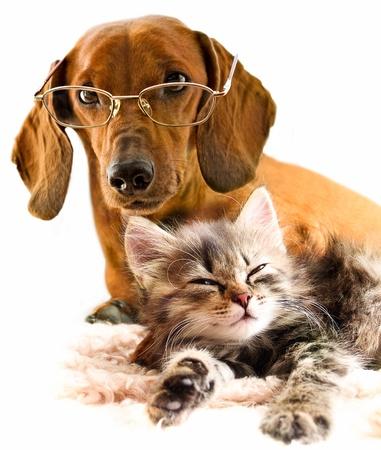 is playful: Perros y gatos  Foto de archivo