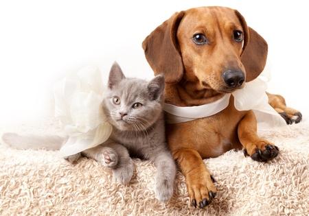 small white dog: Cat and dog  Stock Photo