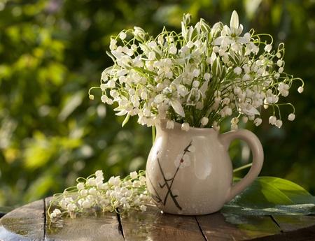 lirio blanco: Lirio de los valles soleado