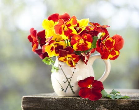 camomiles macro: bouquet of flowers pansies in a jar Stock Photo