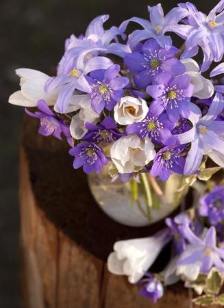 violaceous: bouquet of spring flowers
