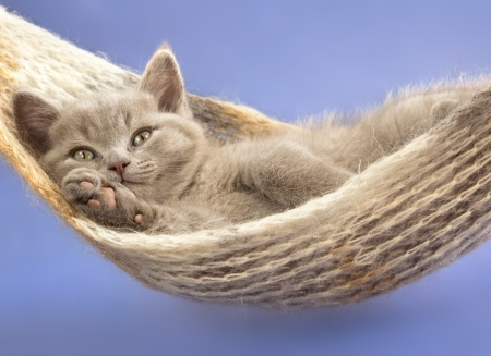 sleeping kitten in a hammock  photo
