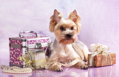 bead jewelry: breed Yorkshire Terrier and gifts