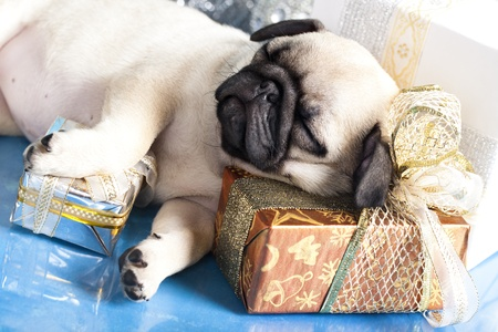 sleeping puppy pug and gifts christmas Stock Photo - 11412286