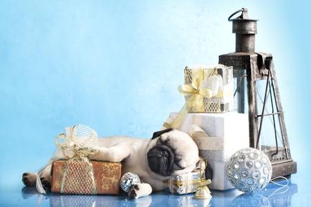 sleeping puppy pug and gifts christmas  photo
