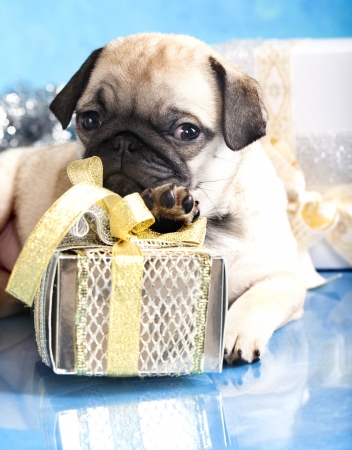 sleeping puppy pug and gifts christmas Stock Photo - 11412243