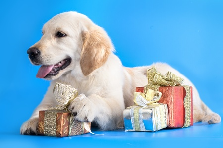 dog  and gifts christmas  photo