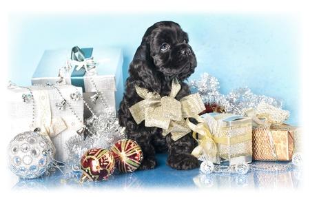 アメリカのコッカー Spaniel 子犬およびクリスマスのプレゼント