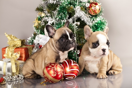 French Bulldog Puppy And Gifts Christmas , Ball Stock Photo, Picture ...