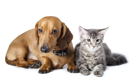cat tail: Cat and dog  Stock Photo