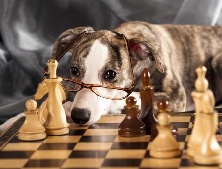 チェスをプレイする子犬
