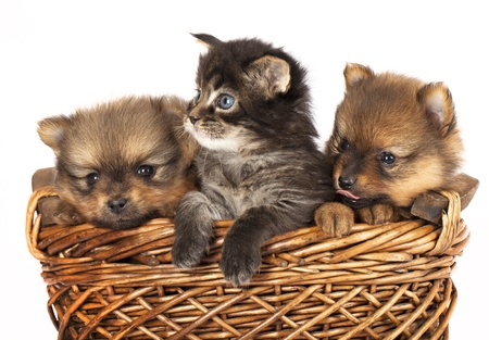 puppies and  kittens  photo
