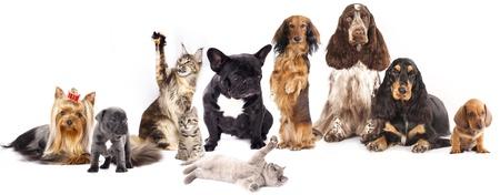 白い背景の前で犬と猫のグループ 写真素材 - 15779763