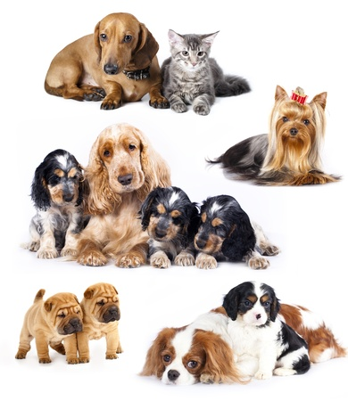 Group of cats and dogs in front of white background  photo