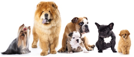 Group of  dogs in front of white background photo